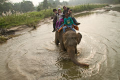 Elephant and riders, Chitwan National Park, Chitwan, Nepal Stock Images