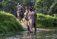 Elephant riders. In Chitwan National Park, Nepal Stock Photos