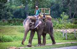 Elephant riders. In Chitwan National Park, Nepal Stock Photography