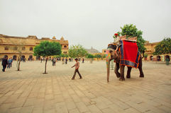 Elephant riders driving on area of ancient indian Amber Fort in India Stock Photography