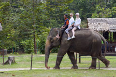 Elephant rides. KUALA GANDAH, MALAYSIA - SEPTEMBER 24: Staff of Kuala Gandah Elephant Conservation Centre riding an elephant with two European tourists on SEP 24 royalty free stock photography
