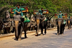 Elephant rides at Angkor Wat Royalty Free Stock Image