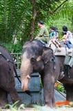 Elephant Rides Royalty Free Stock Image