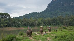 Elephant Rides in Laos on November, 2013 Stock Photography