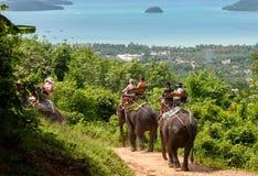 Elephant Rides in Phuket Stock Images