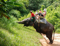 Elephant Rides in Phuket Stock Photography