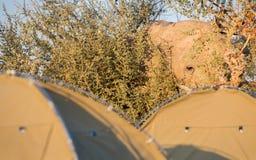 Elephant and ridge tent Stock Photo