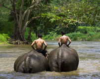 Elephant riding. KANCHANABURI, THAILAND - AUGUST 29: two villagers ride elephants on August 29, 2009 in Sangklaburi, Kanchanaburi, Thailand. Sangklaburi is Stock Image