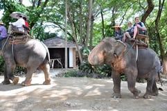 Elephant riding. Tourists ride on the back of the elephants Stock Photo