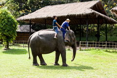 Elephant riding Royalty Free Stock Photography