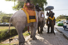 Elephant riding in Ayutthaya, Mahouts and elephants in war costumes Stock Photos