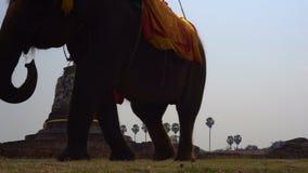 Elephant riding in Ayutthaya. The tourist rode on elephant back to see the Pra Nakorn Sri Ayutthaya historical park on. February. 4k UHD stock video