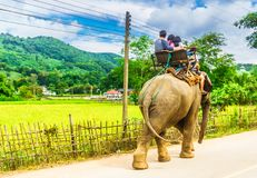 Elephant riding by Chiang Mai in Thailand. View on Elephant riding by Chiang Mai in Thailand Royalty Free Stock Photo