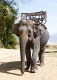 Elephant for riding Royalty Free Stock Image