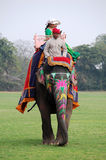 Elephant riding in India Royalty Free Stock Photography