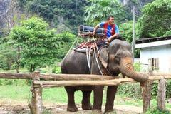 Elephant riding in Krabi Thailand Royalty Free Stock Photos