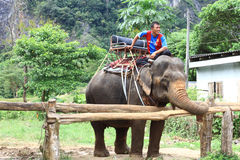 Elephant riding in Krabi Thailand Stock Images