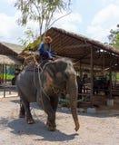 Elephant riding Royalty Free Stock Photos
