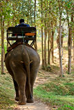 Elephant riding for tourists in nort of Thailand Royalty Free Stock Photography