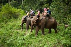 Elephant riding Royalty Free Stock Images