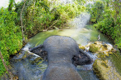 Elephant riding. Elephant walking in a river in the jungle Royalty Free Stock Image