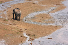 Elephant at the river Royalty Free Stock Image