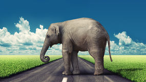 Elephant on the road stock illustration