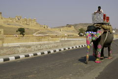 Elephant on the Road. Elephant with decorated head and trunk walking along the road at Amber Fort in Jaipur, Rajasthan, India royalty free stock photo