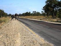 Elephant on the road, Namibia. The Elephant on the road, Namibia stock photo