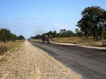 Elephant on the road, Namibia. The Elephant on the road, Namibia stock images