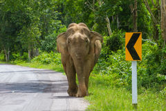 Elephant on the road. In park, Thailand stock images