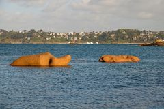 Pink Granite elephants near Perros Guirec in Brittany. Elephant rocks swimming in the water. Côte de Granit Rose is one of the most beautiful stretches of royalty free stock photos