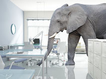 Elephant in a room. Huge elephant walk in modern office stock photos