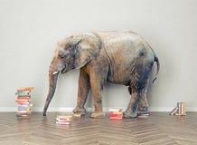 Elephant  in the room Stock Photo