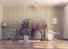 A elephant in a room. A elephant calm in a room. photo combinated concept royalty free illustration