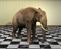 Elephant, Room, Checkered Floor Illustration Stock Photos