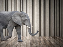 Elephant in the room Royalty Free Stock Photo