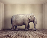 Elephant in the room. Metaphor for an obvious problem or risk no one wants to discuss stock image