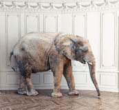 Elephant  in the room Royalty Free Stock Photography
