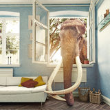 The elephant in the room Stock Photography