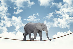 Elephant on rope Stock Photo