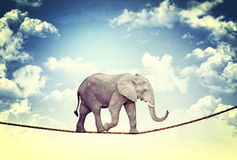 Elephant on rope Stock Photos