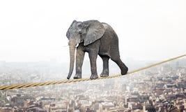 Elephant on rope stock image
