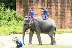 The Elephant Round-up Stock Photos