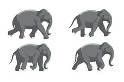 Elephant Run Stock Images