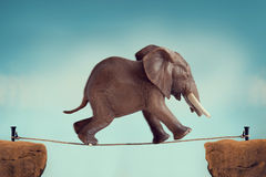 Elephant running across a tightrope Stock Photography