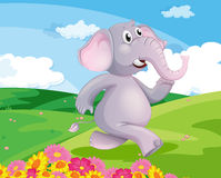 An elephant running at the hill with flowers Stock Photos
