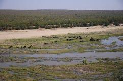 Elephant& x27; s royalty-vrije stock fotografie