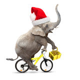 Elephant's christmas. Stock Photo