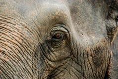 Elephants eye Stock Images